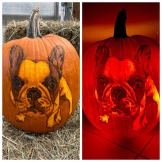 Dog Portrait Pumpkin Carving