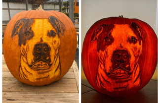 Pet Portrait Pumpkin Carving