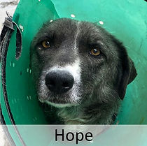 Hope01.JPG