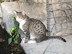 Cat_WR02.jpg