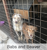 Babs%2520and%2520Beaver%2520in%2520new%2
