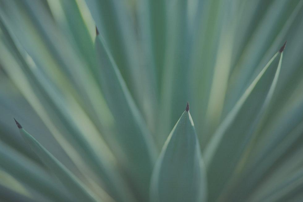 Plants_edited.jpg