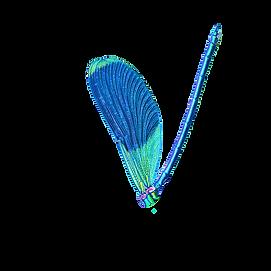 rovski_logo%20V1_edited.png