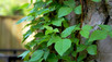 Watch out for Poisonous Plants - What Should I Look For?