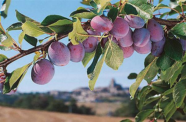 prune-branch.jpg