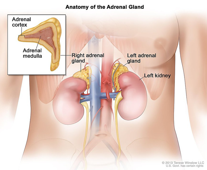 So, How Are Your Adrenals Doing?