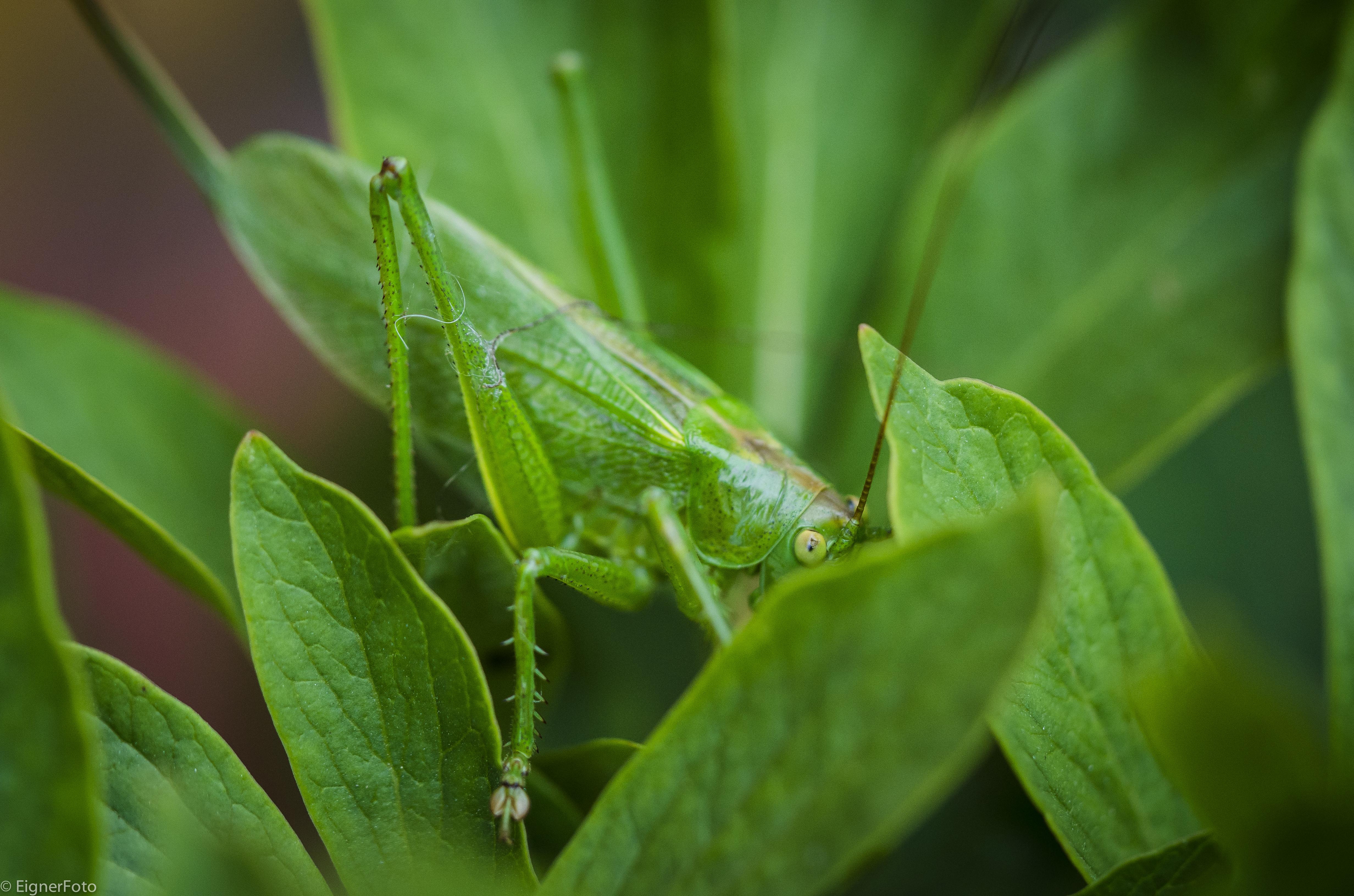 Insekten-5