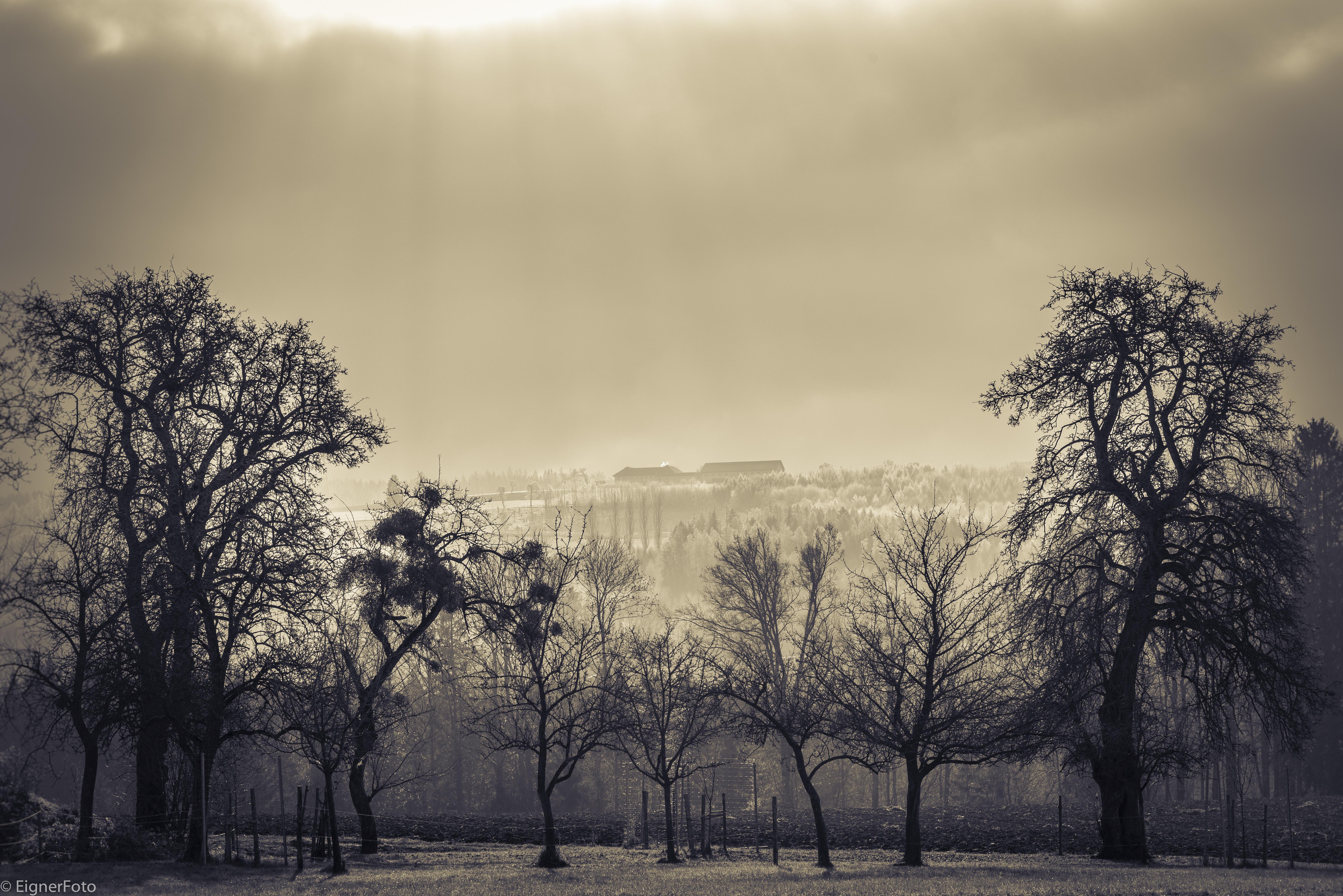 Eis und Nebel-6