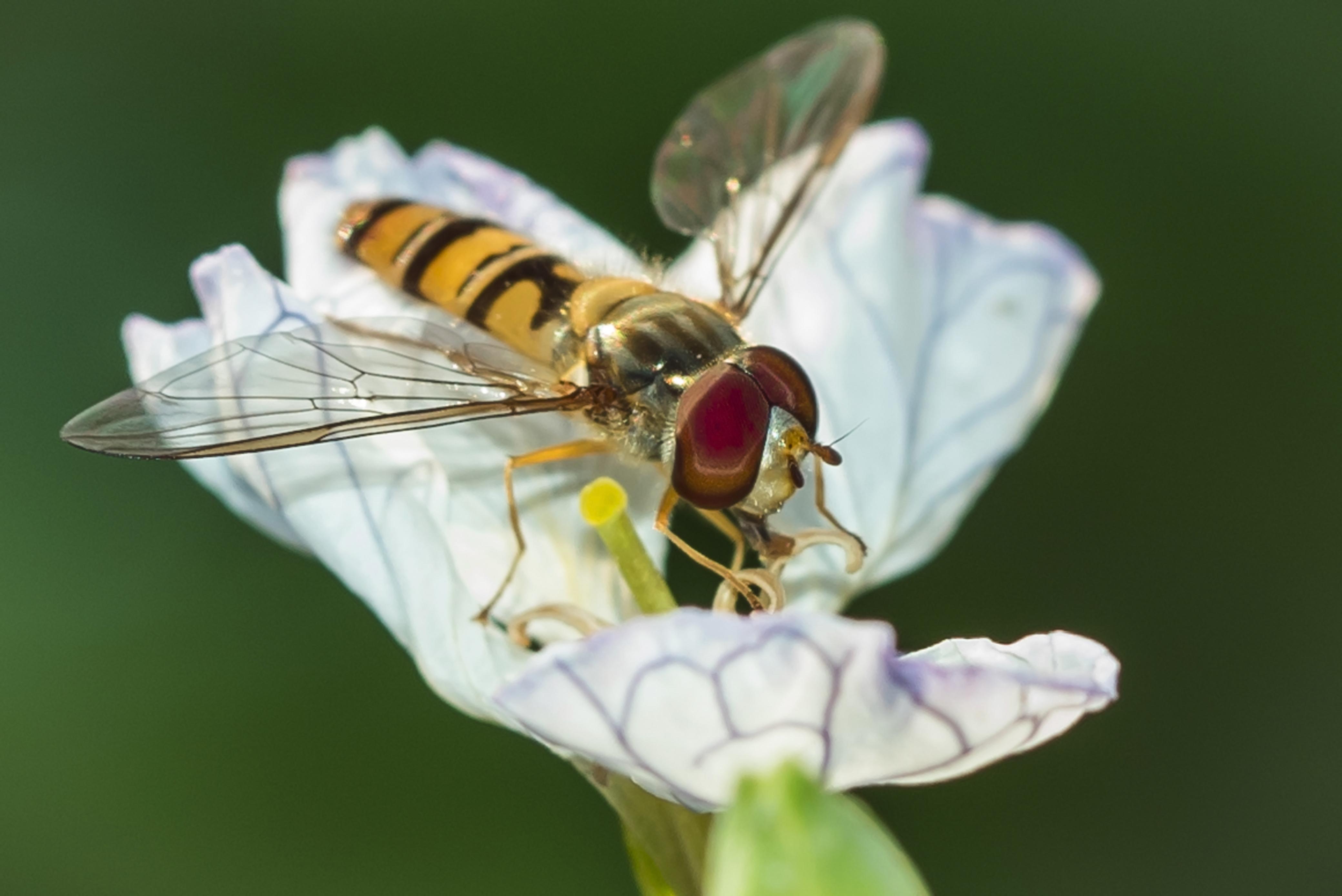 Insekten-6