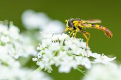 Insekten-2