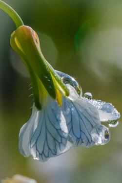 Gartenpflanzen_Tropfen-3