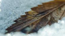 Das Blatt im Schnee
