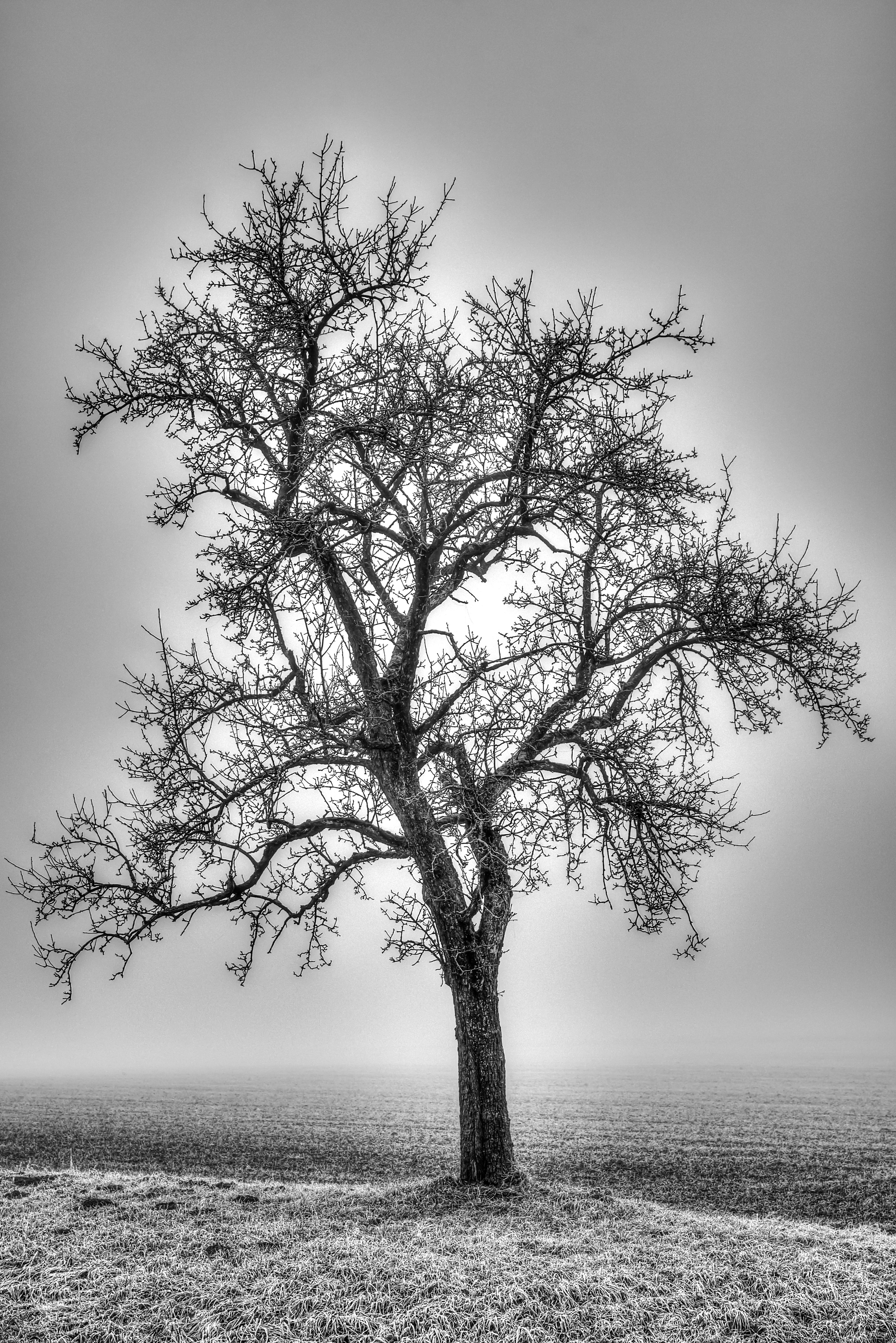 Baum_Nebel-2