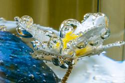 Wasserblume-3