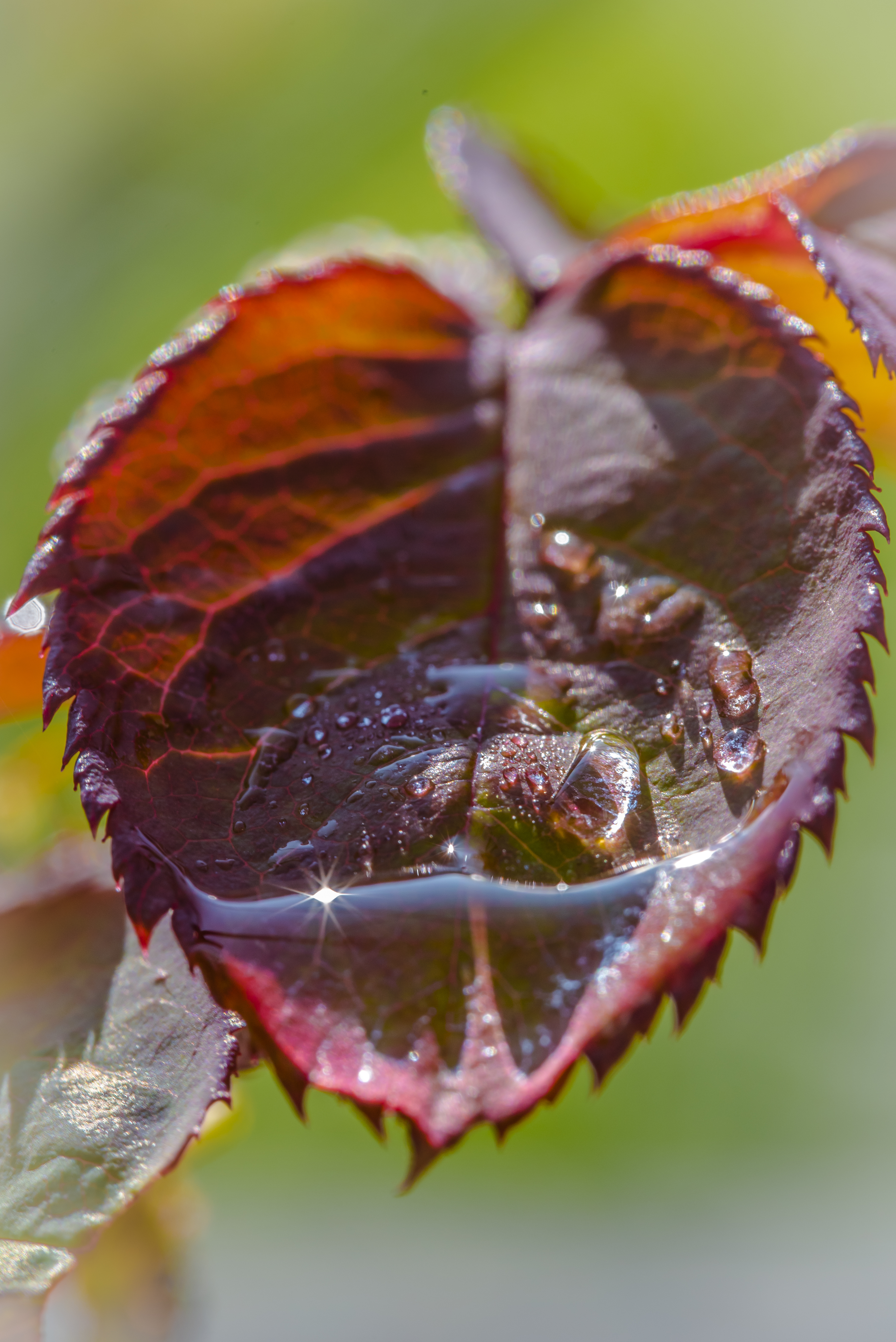 Gartenpflanzen_Tropfen-7