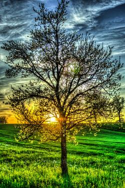 Baum_Sonnenuntergang