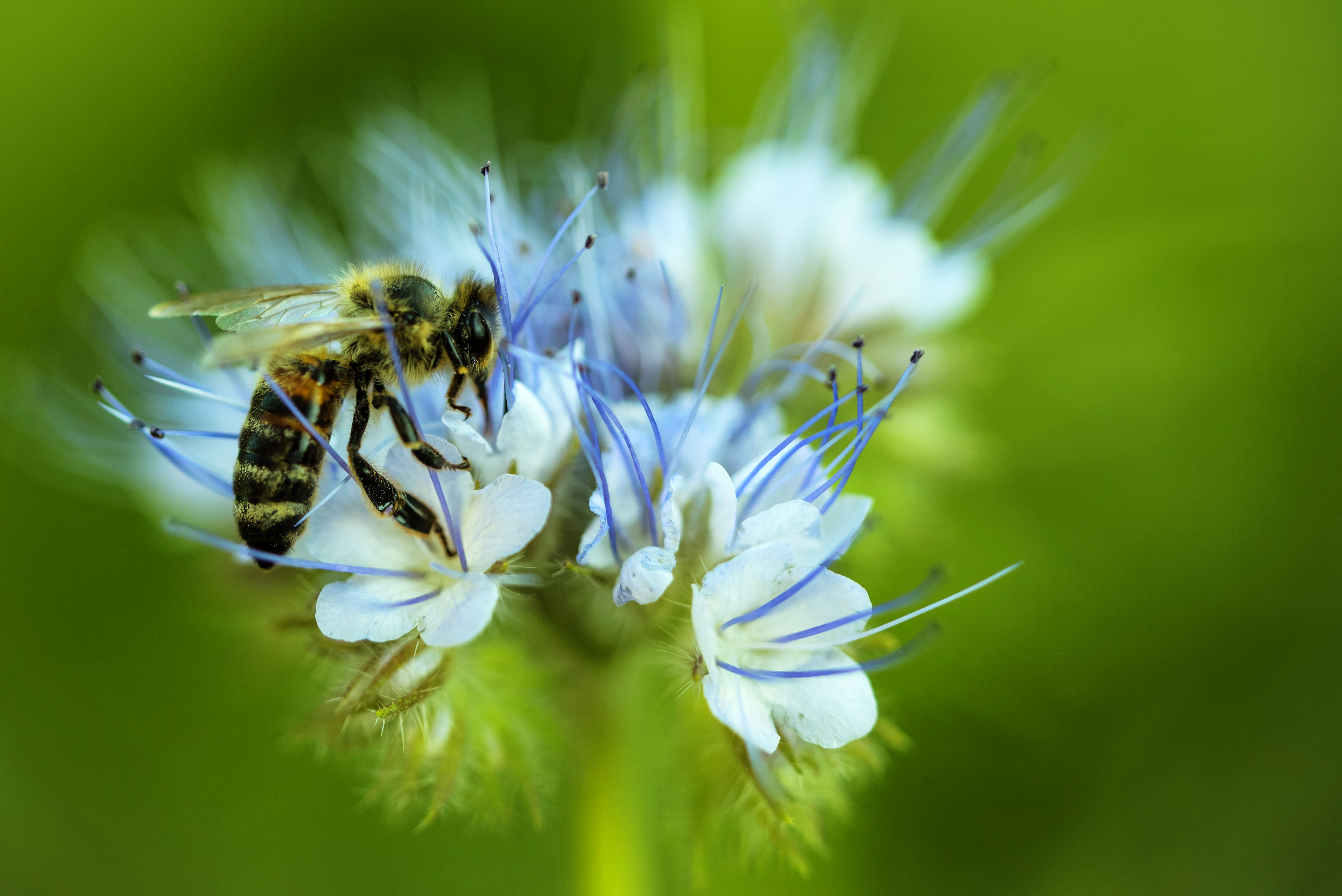 Insekten_tonemapped