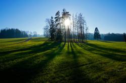 Wald_Gegenlicht_1jpg
