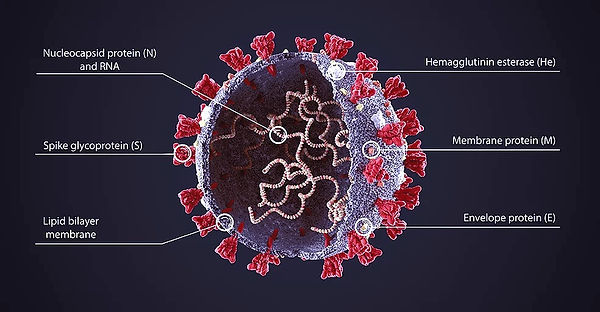 Corona_Virus_Shape_1000_527_edited.jpg