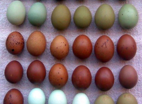 Farm-Fresh Egg CSA