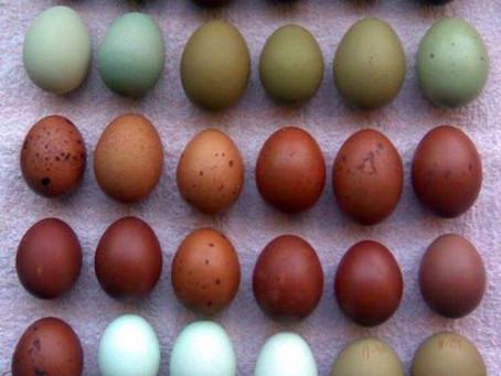 Farm-Fresh Egg CSA