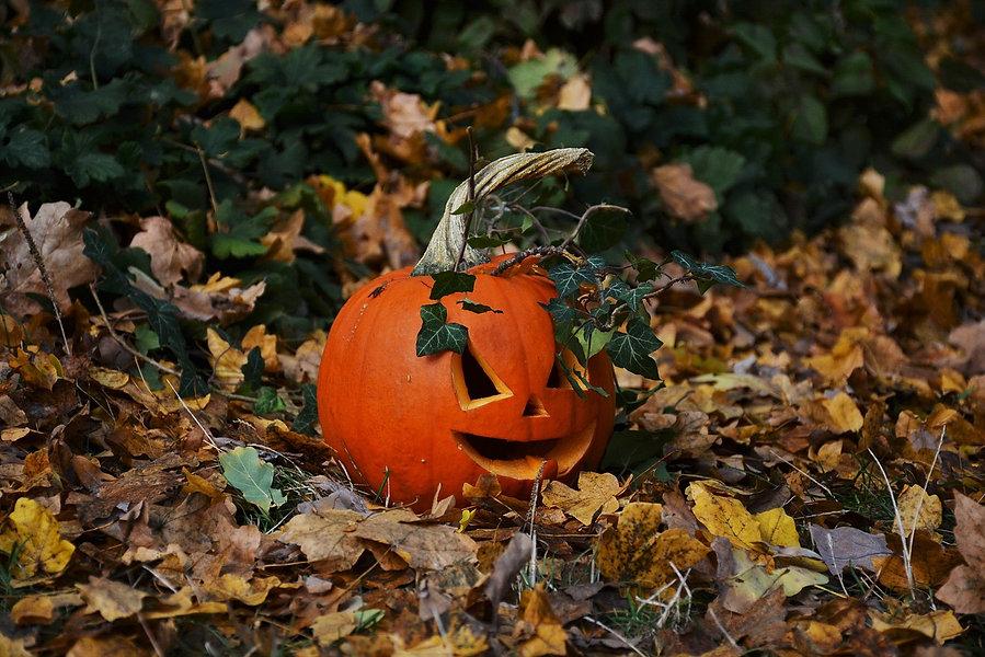 pumpkin-1781240_1280.jpg