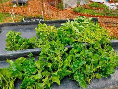 Subang Jaya Community Compost