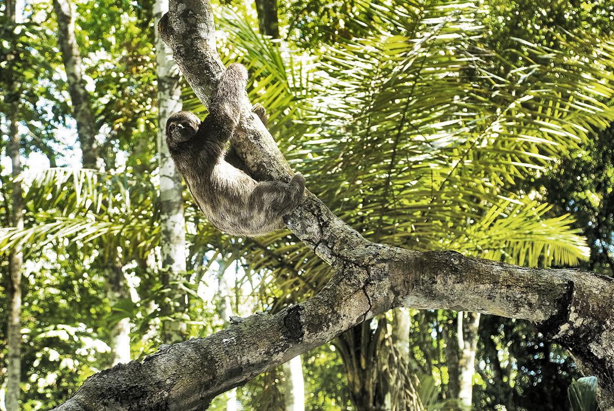 Sloth-1400px copy.jpg