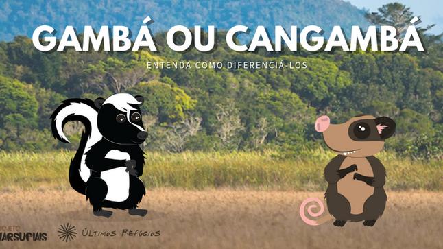 Você sabe o que é um Gambá? E um Cangambá?