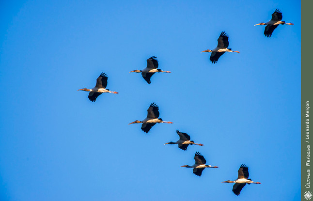 """As Aves e a formação em """"V"""""""
