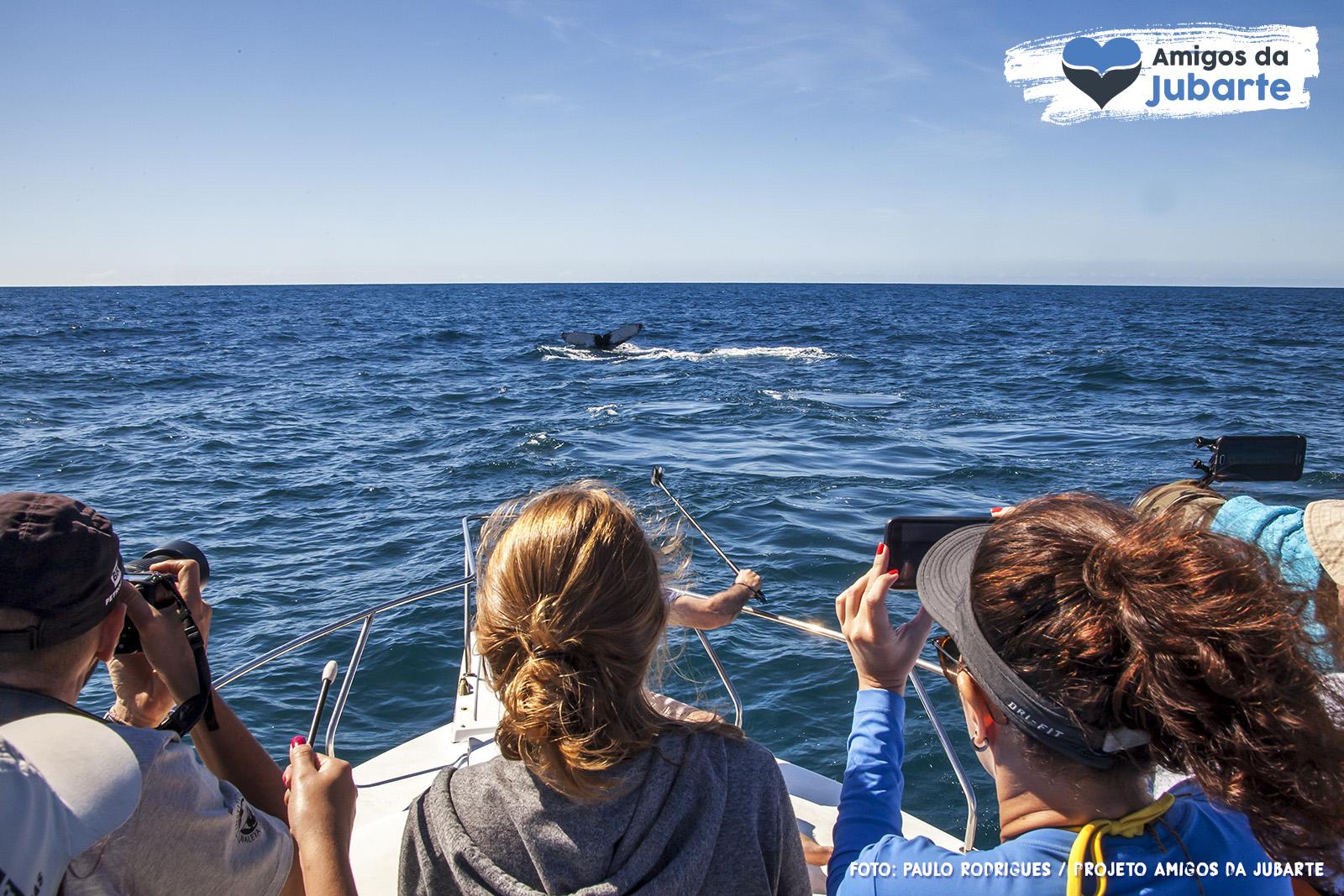 Observação de Baleias 02