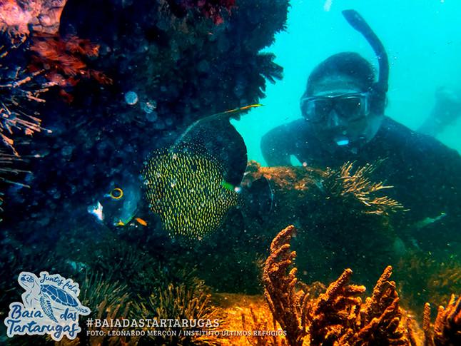 Baía das Tartarugas: a nova Unidade de Conservação do ES