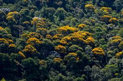 Atlantic Forest_Domingos Martins_Leonardo Mercon.JPG