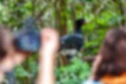 Curso de fotografia de natureza em Sooretama-ES, Brasil