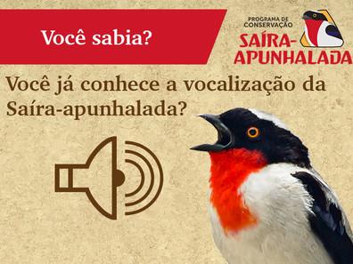 O canto da Saíra-apunhalada e o engajamento através da ciência cidadã!