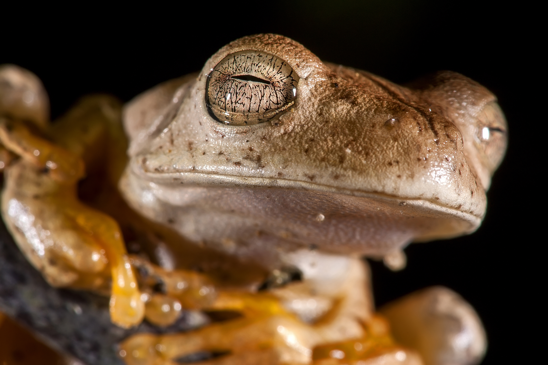 Tree-Frog Portrait