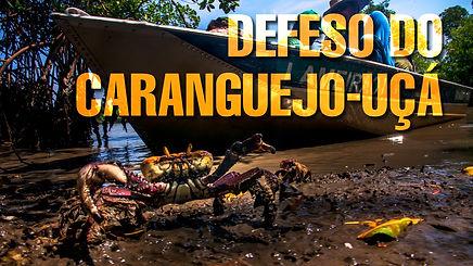Vídeo Defeso do Caranguejo-Uça