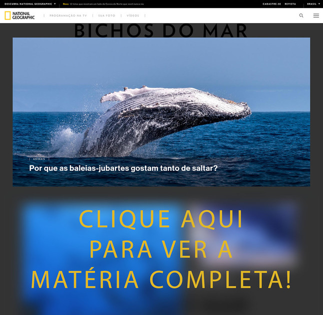 Matéria sobre as Baleias Capixabas na Capa do Site da National Geographic