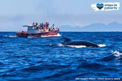 Observação de Baleias 01