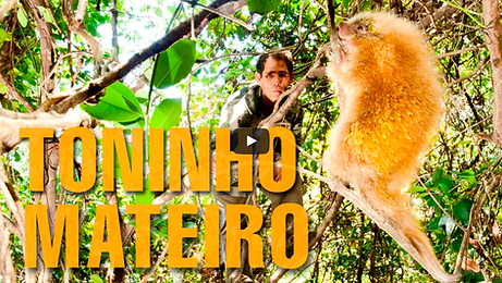 Documentário Toninho Mateiro