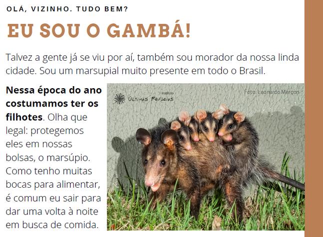 """""""Cartaz educativo: conheça e proteja os gambás brasileiros"""""""
