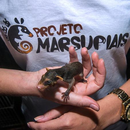 Camisa do Projeto Marsupiais