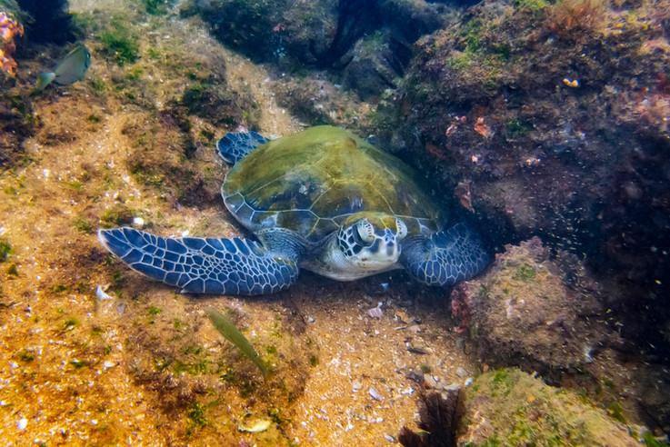 Baía das Tartarugas - Vitória da Restinga