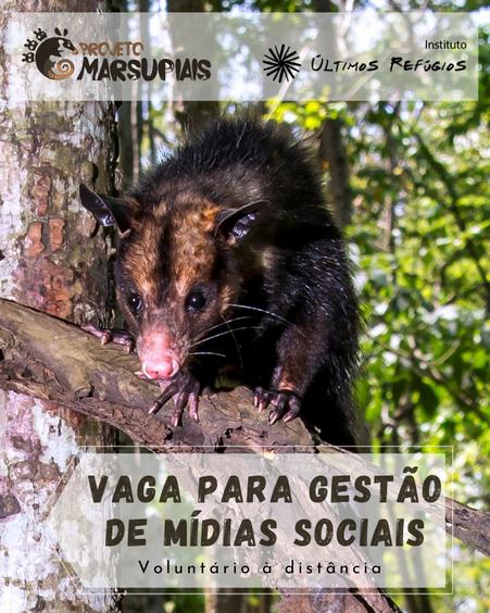 Projeto Marsupiais lança edital para voluntariado à distância