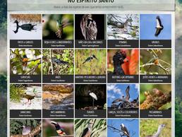 Guia Online de Aves do Espírito Santo