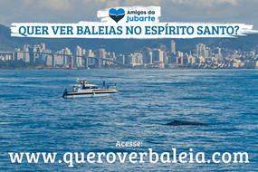 JUJUBA'S NIGHT (MAKING OFF) - Projeto Amigos da Jubarte