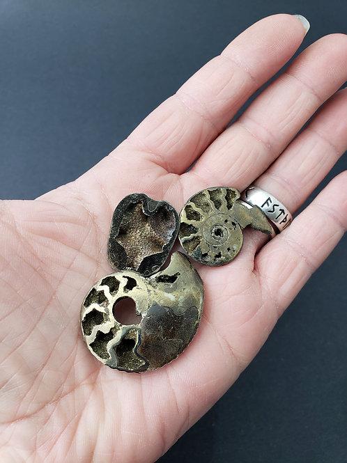 Pyratized Ammonite
