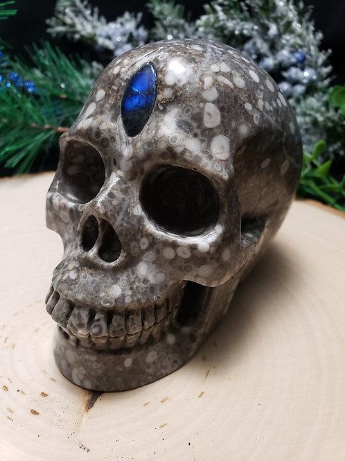 Crinoid Fossil Skull with Labradorite Third Eye