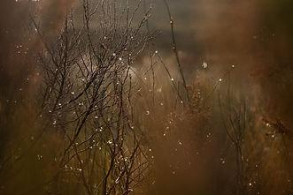 snow_franschoek-23.jpg