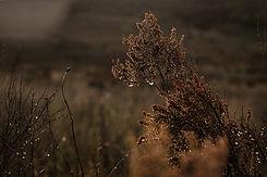 snow_franschoek-21.jpg